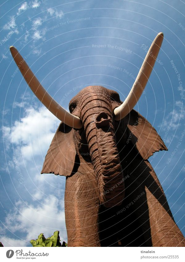 stone jumbo Elephant Africa Clouds Sculpture Brown Trunk Set of teeth Sky Shadow Perspective Stone
