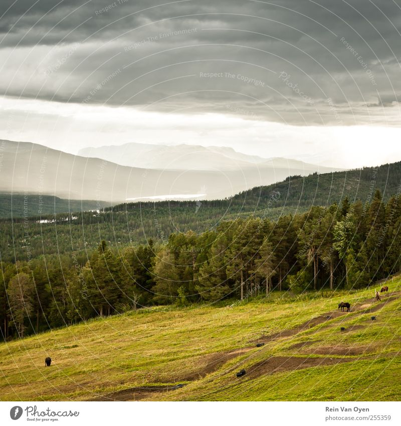 Pyr Gynt's hills Environment Nature Landscape Animal Sky Clouds Horizon Summer Autumn Field Forest Hill Mountain Farm animal Horse 3 Group of animals Herd Flock
