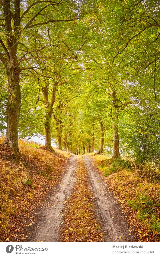 Scenic road in an autumnal forest Vacation & Travel Trip Adventure Expedition Camping Nature Landscape Autumn Tree Forest Street Lanes & trails Dream Brown