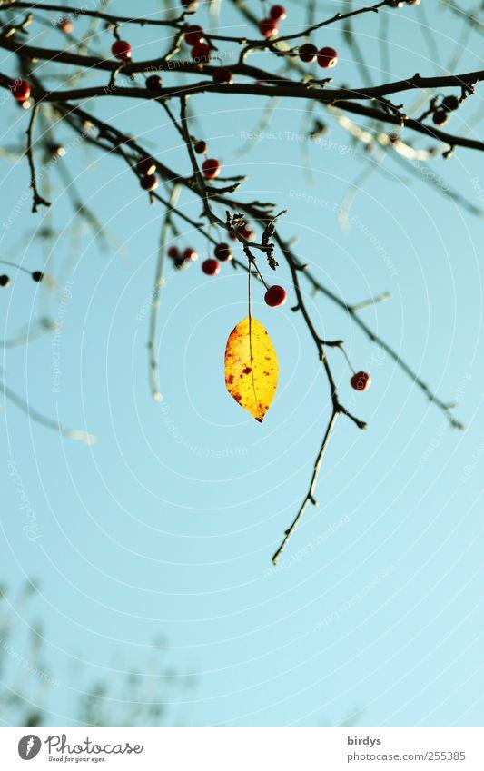 Sky Nature Blue Beautiful Tree Plant Leaf Loneliness 1 Yellow Autumn Fruit Esthetic Change Illuminate Transience