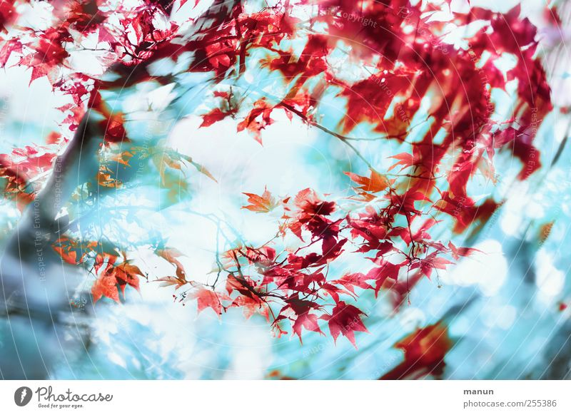 Nature Blue Tree Plant Red Leaf Autumn Movement Spring Art Wind Modern Crazy Exceptional Fantastic Chaos