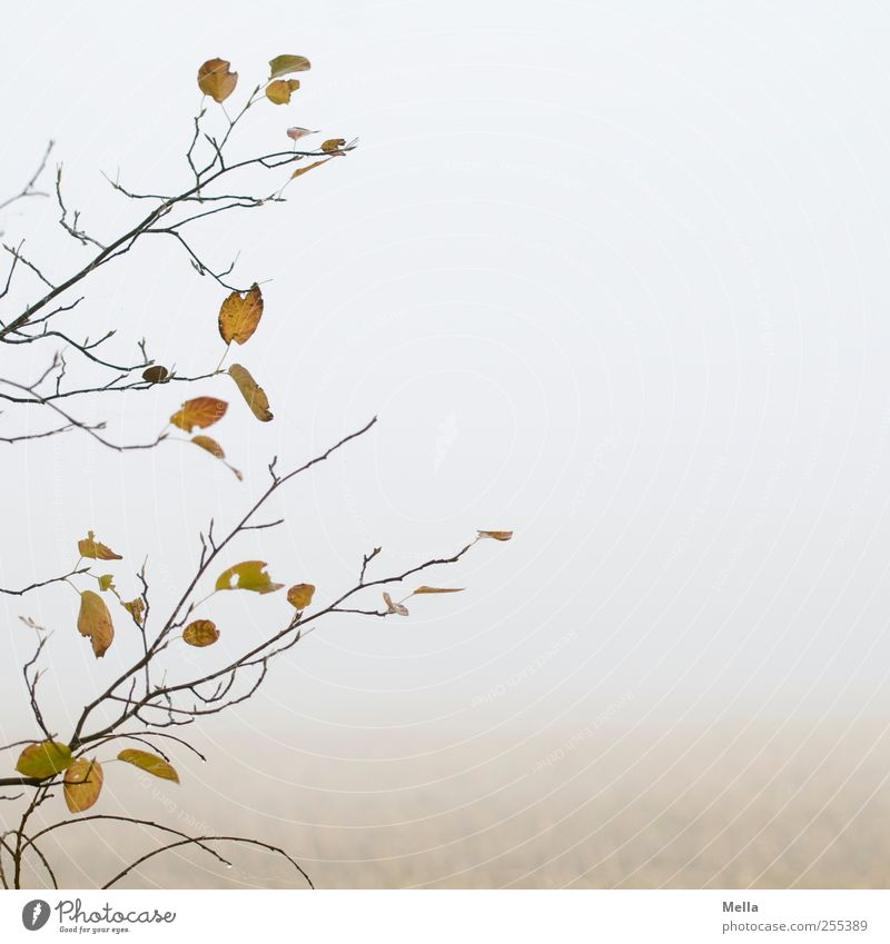 Nature Tree Plant Leaf Calm Autumn Environment Gray Air Bright Field Fog Natural Gloomy Change Transience