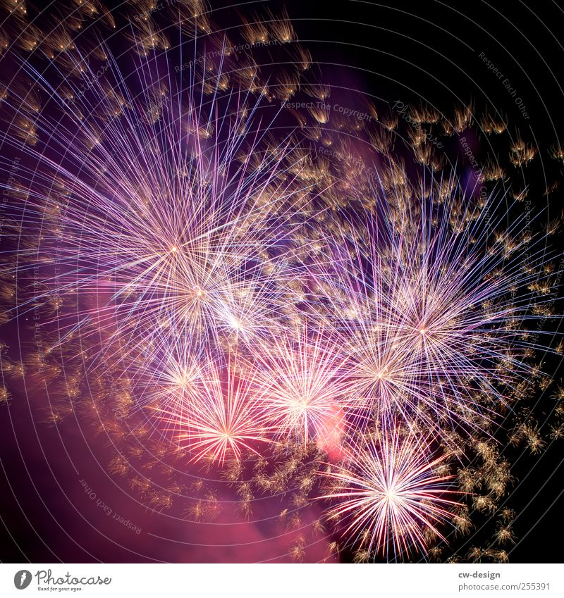 For you it's supposed to rain colorful pictures. Night life Event Feasts & Celebrations New Year's Eve Glittering Blue Black Firecracker Explosion Pyrotechnics