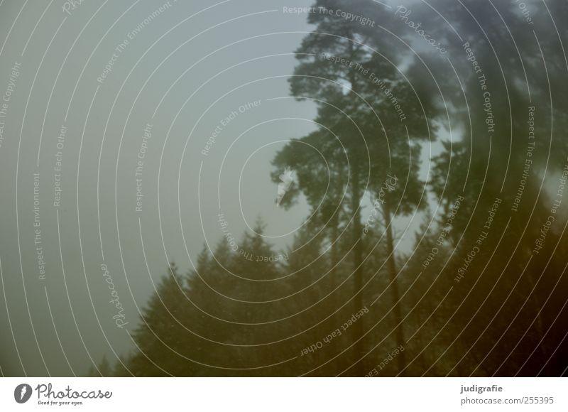 Nature Tree Plant Winter Forest Dark Environment Landscape Fog Bad weather