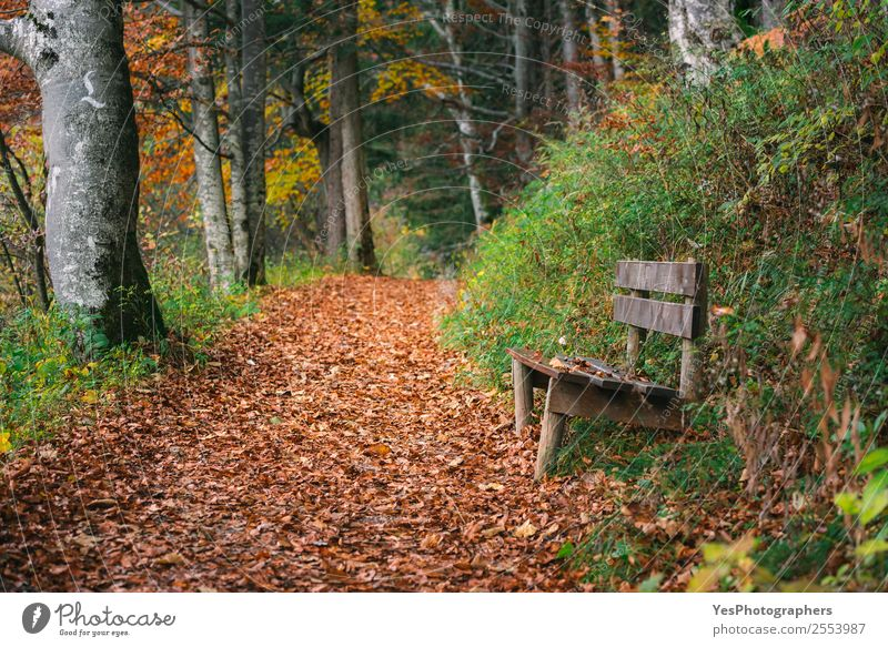 Forest alley with autumn leaves and wooden bench Beautiful Hiking Nature Autumn Leaf Mountain Free Natural Gold Bavaria Fussen Germany October Alley