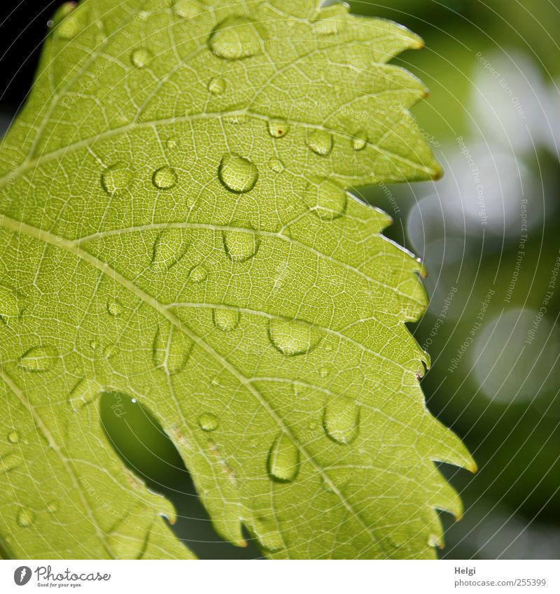 Nature Green White Plant Summer Leaf Environment Gray Rain Wet Fresh Drops of water Natural Esthetic Growth Uniqueness