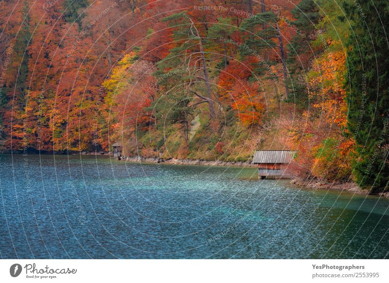 Wooden cottage on Alpsee lake and autumn forest Beautiful Vacation & Travel Trip Freedom Nature Landscape Autumn Tree Leaf Forest Lake Tourist Attraction Dream