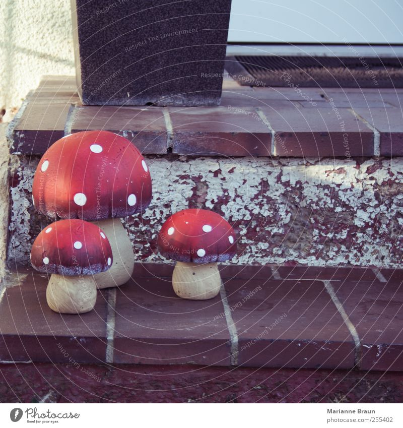 porcini mushrooms Stairs Brown Red White Amanita mushroom 3 poisonous mushroom Mushroom Mushroom cap Darling of fortune Good luck charm Symbols and metaphors