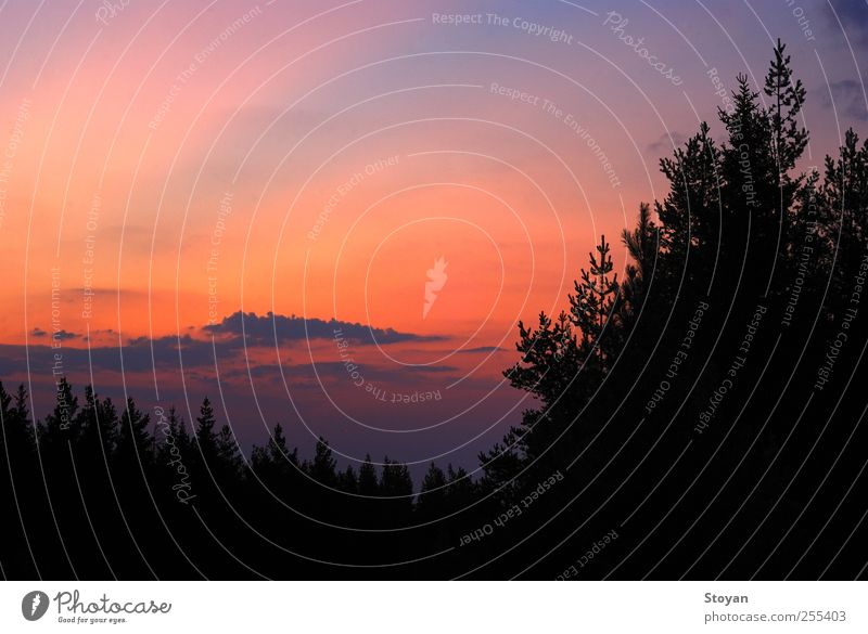 Sunset - Vitosha, Bulgaria Nature Landscape Earth Air Sky Cloudless sky Clouds Horizon Climate change Weather Plant Tree Leaf Foliage plant Wild plant Forest