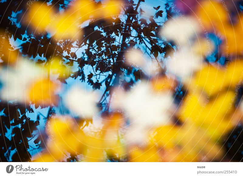 Blue Beautiful Leaf Yellow Autumn Lake Dream Art Exceptional Illuminate Painting and drawing (object) Autumn leaves Surface of water Autumnal Maple leaf