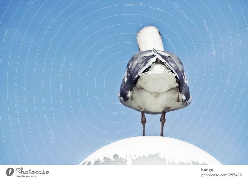 Sky Animal Legs Bird Sit Wait Wing Feather Street lighting Seagull Boredom Blue sky Seagull droppings