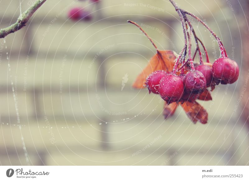 Nature Plant Meadow Cold Wall (barrier) Gate Berries Wild plant