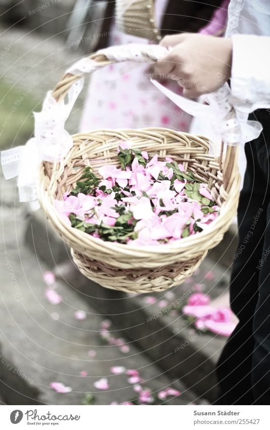 Human being Hand Happy Feasts & Celebrations Pink Stairs Wedding Church Suit Tradition Basket Hippie Blossom leave Ritual Distribute Wickerwork
