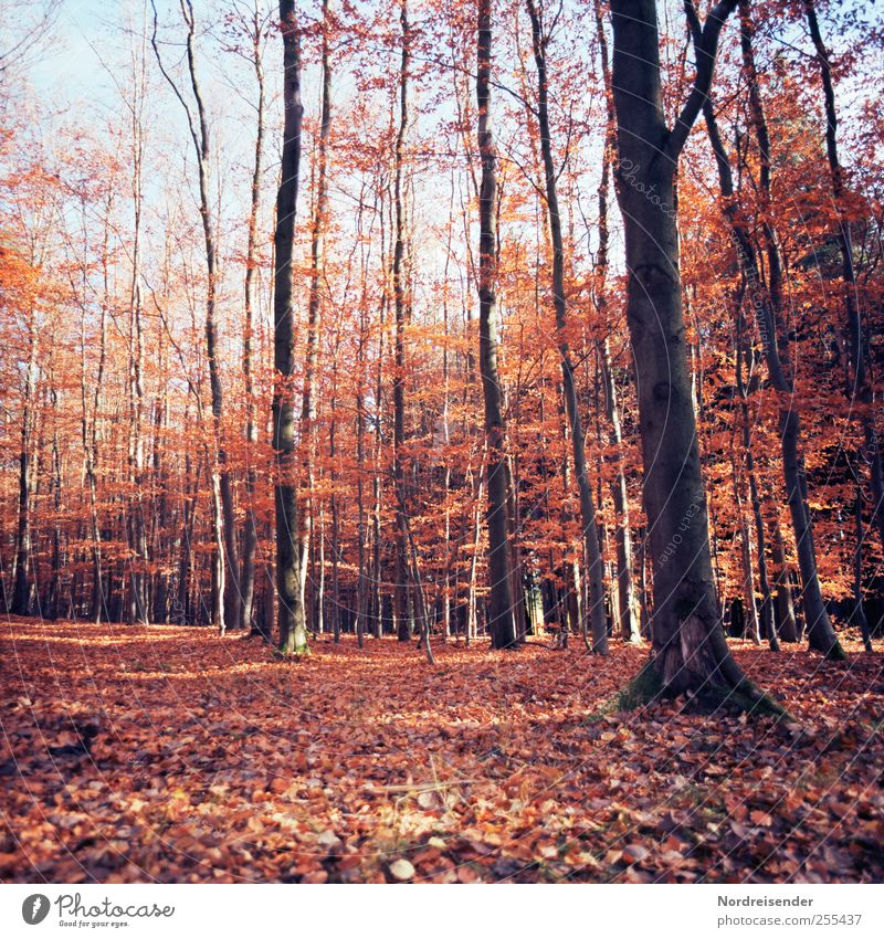 Nature Plant Colour Relaxation Landscape Calm Forest Warmth Autumn Lanes & trails Brown Beautiful weather Friendliness Agriculture Fragrance Analog