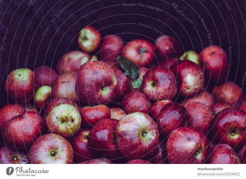 Fresh organic apple harvest Food Fruit Apple Nutrition Organic produce Vegetarian diet Diet Fasting Finger food Organic farming Healthy Eating