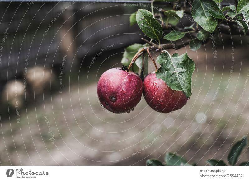 Fresh Organic Apples Scattered Fruit Food Fruittree meadow Nutrition Eating Picnic Organic produce Vegetarian diet Diet Fasting Finger food Lifestyle Joy Happy