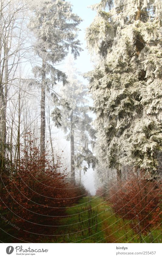Nature Beautiful Tree Plant Winter Forest Autumn Cold Landscape Ice Fog Beginning Free Climate Authentic Change