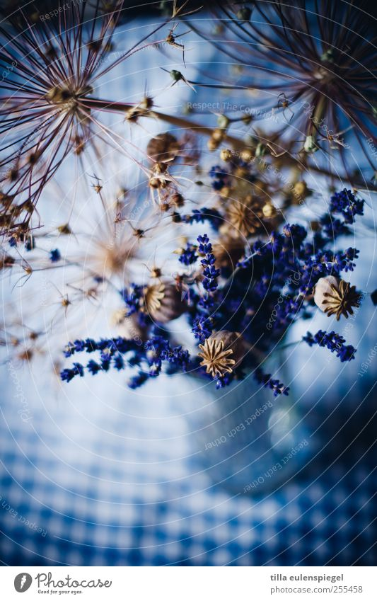 Blue Colour Dark Decoration Transience Bouquet Checkered Lavender To dry up Blue-white Table decoration Dried flower Poppy capsule