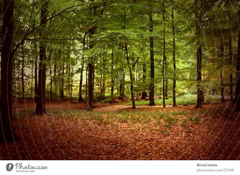 autumn forest Tree Forest Autumn Leaf Autumn leaves Woodground Shadow Nature