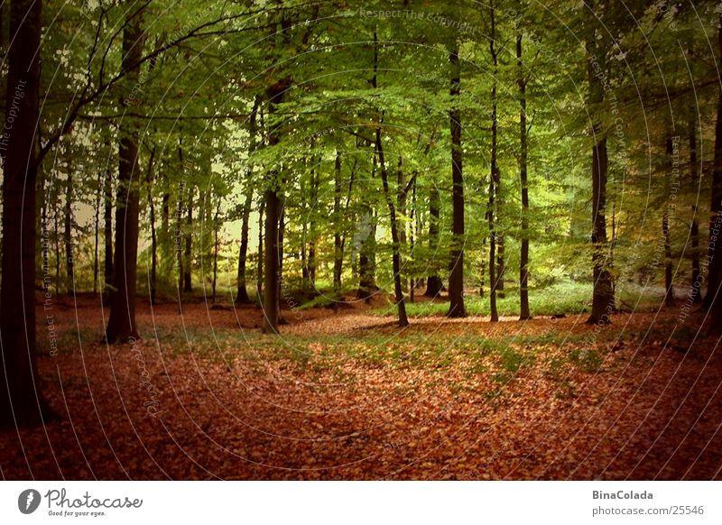 Nature Tree Leaf Forest Autumn Autumn leaves Woodground