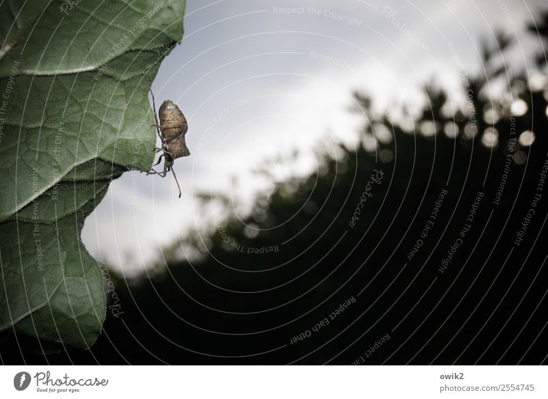 eavesdropping attack Environment Nature Plant Animal Sky Beautiful weather Bushes Leaf Hedge Garden Wild animal Bug 1 Observe Movement To hold on Small Near