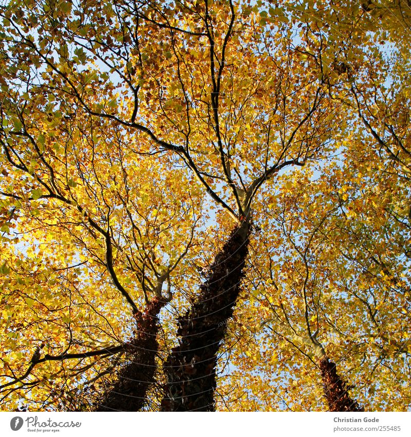 Sky Nature Blue Tree Plant Leaf Animal Forest Yellow Autumn Environment Freedom Landscape Garden Air Park