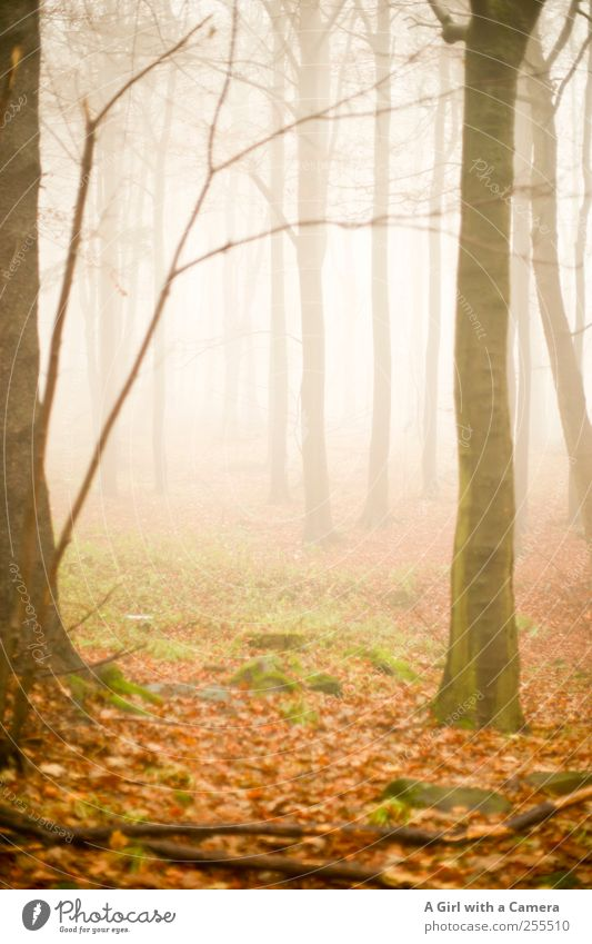 two reasons to celebrate Environment Nature Landscape Autumn Bad weather Fog Forest Elegant Infinity Creepy Wild Steep Subdued colour Exterior shot Deserted