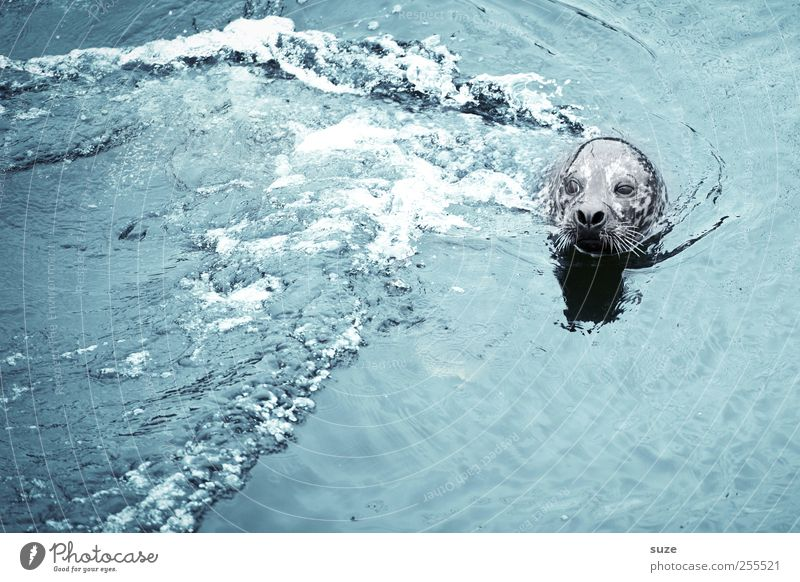 Nature Blue Water Ocean Animal Environment Head Waves Swimming & Bathing Wild animal Wild Cute Curiosity Observe Animal face Float in the water