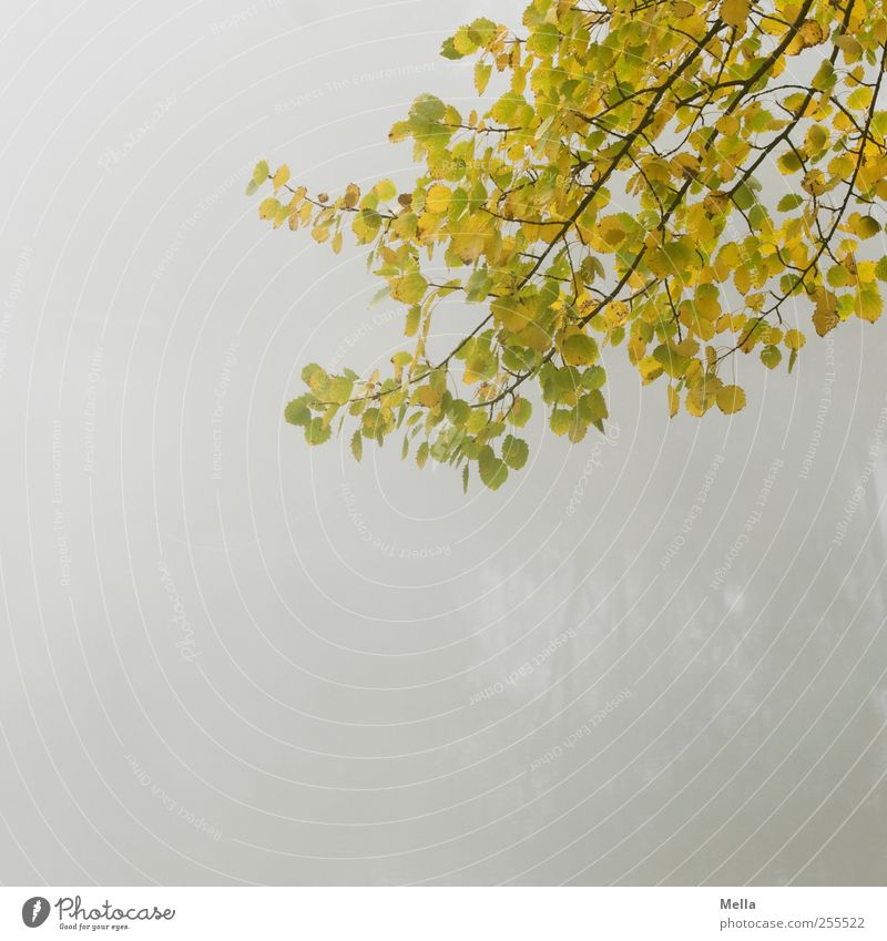 For you it's supposed to rain colorful pictures Environment Nature Plant Autumn Fog Tree Leaf Branch To dry up Growth Natural Gloomy Gray Calm Decline Time