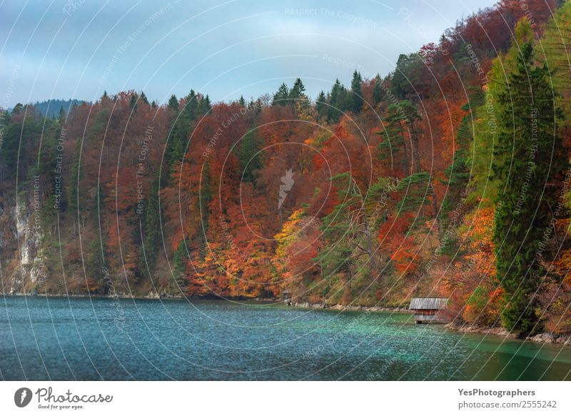 Colorful autumn forest and Alpsee lake Vacation & Travel Nature Landscape Clouds Autumn Tree Leaf Forest Tourist Attraction Dream Positive Warmth Moody Colour