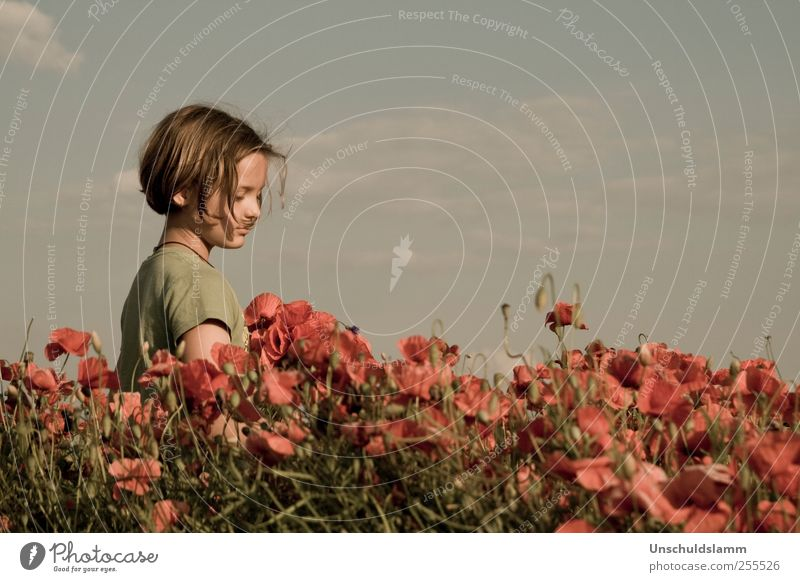 Human being Child Sky Nature Plant Red Summer Flower Calm Meadow Life Environment Landscape Emotions Boy (child) Warmth