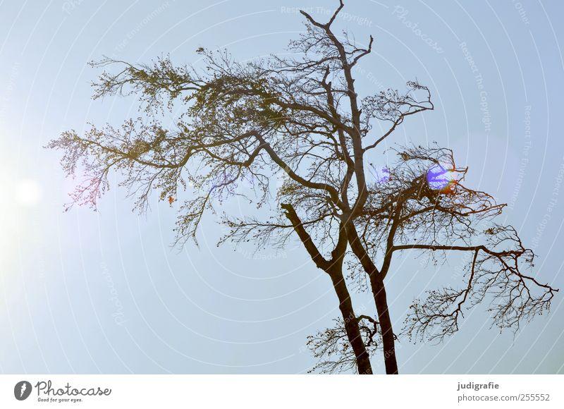 Sky Nature Tree Plant Environment Natural Transience Bleak
