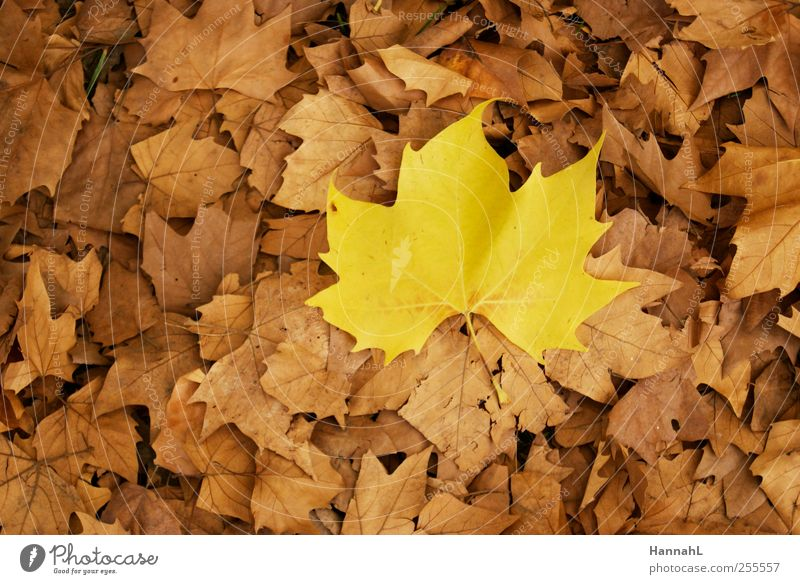 be different! Plant Autumn Leaf To dry up Yellow Calm Uniqueness Colour photo Exterior shot Deserted Day Contrast Bird's-eye view