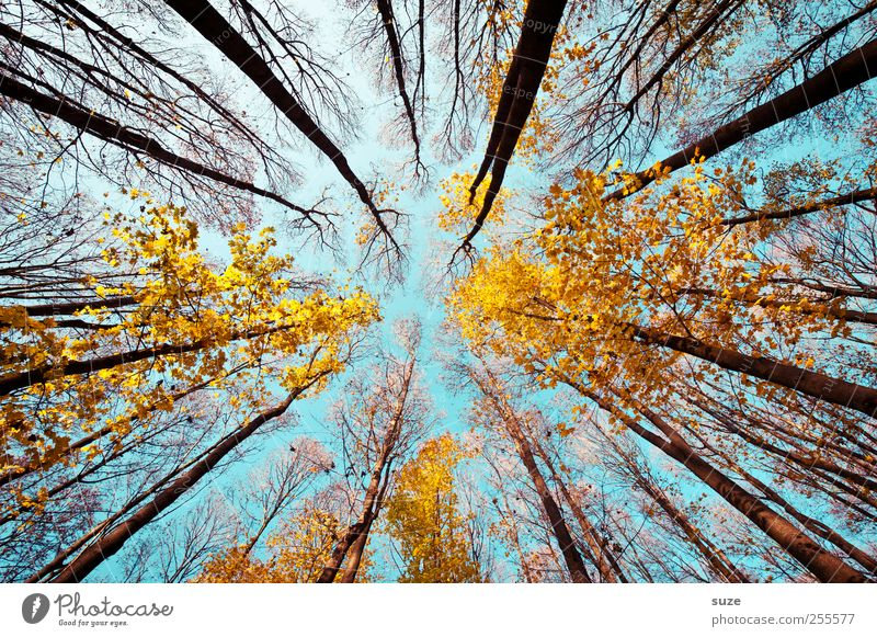 escape route Agriculture Forestry Environment Nature Landscape Plant Sky Autumn Climate Beautiful weather Tree Illuminate Large Tall Blue Yellow Esthetic