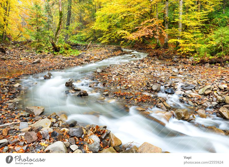 River in autumn forest with colorful trees Beautiful Vacation & Travel Tourism Trip Adventure Summer Environment Nature Landscape Plant Water Autumn