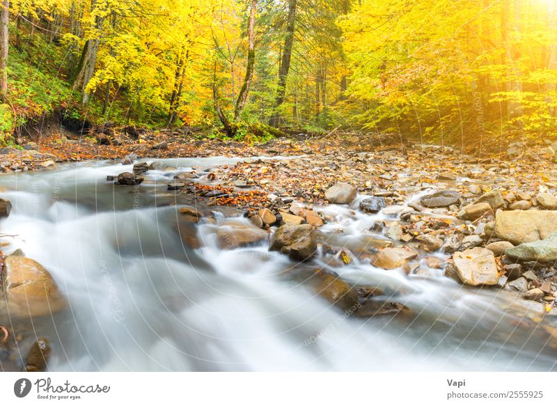 River in autumn forest with colorful trees Nature Vacation & Travel Blue Beautiful Colour Green Water Landscape Sun White Tree Red Leaf Forest Black Yellow