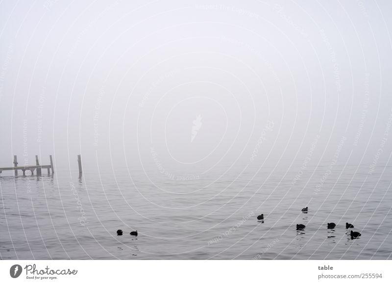Sky Nature Water Summer Winter Animal Clouds Loneliness Calm Environment Dark Landscape Autumn Berlin Gray Lake