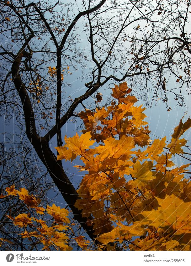 autumn pallet Environment Nature Landscape Plant Air Cloudless sky Autumn Climate Weather Beautiful weather Tree Leaf Wild plant Twigs and branches Movement