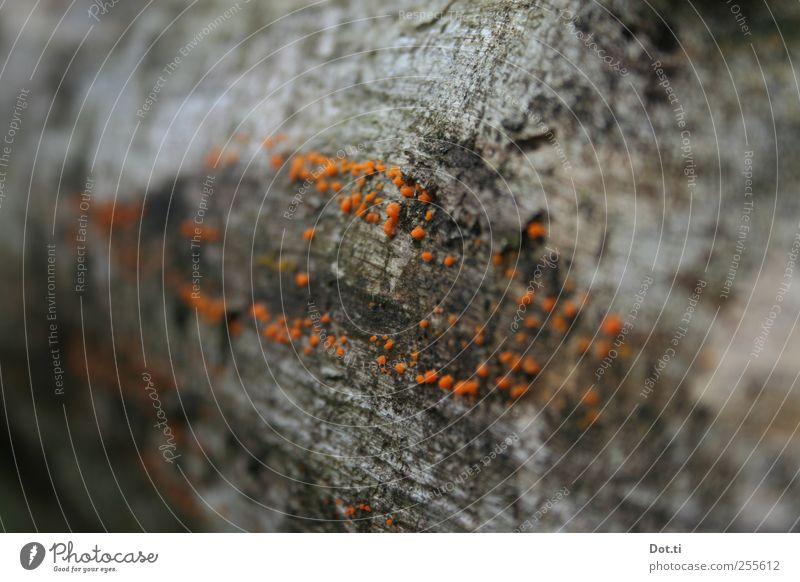 Nature Tree Plant Orange Tree bark Symbiosis Log Tree fungus