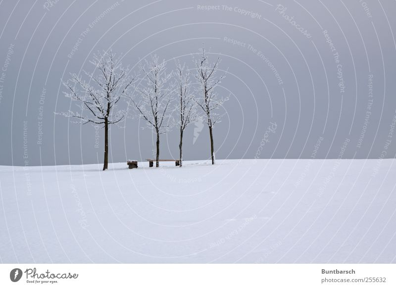 bank guard Winter Snow Winter vacation Landscape Sky Ice Frost Tree Cold Gloomy Gray White Calm Deserted Bench Resting place Colour photo Subdued colour