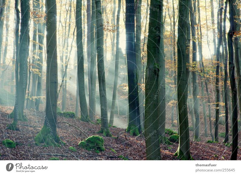 There is a light.... Environment Nature Landscape Animal Air Sunlight Autumn Beautiful weather Tree Moss Leaf Forest Brown Multicoloured Yellow Gold Green Pink