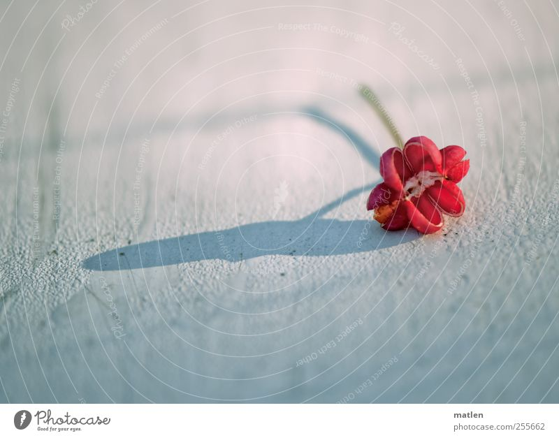 White Plant Red Autumn Drops of water Wooden board
