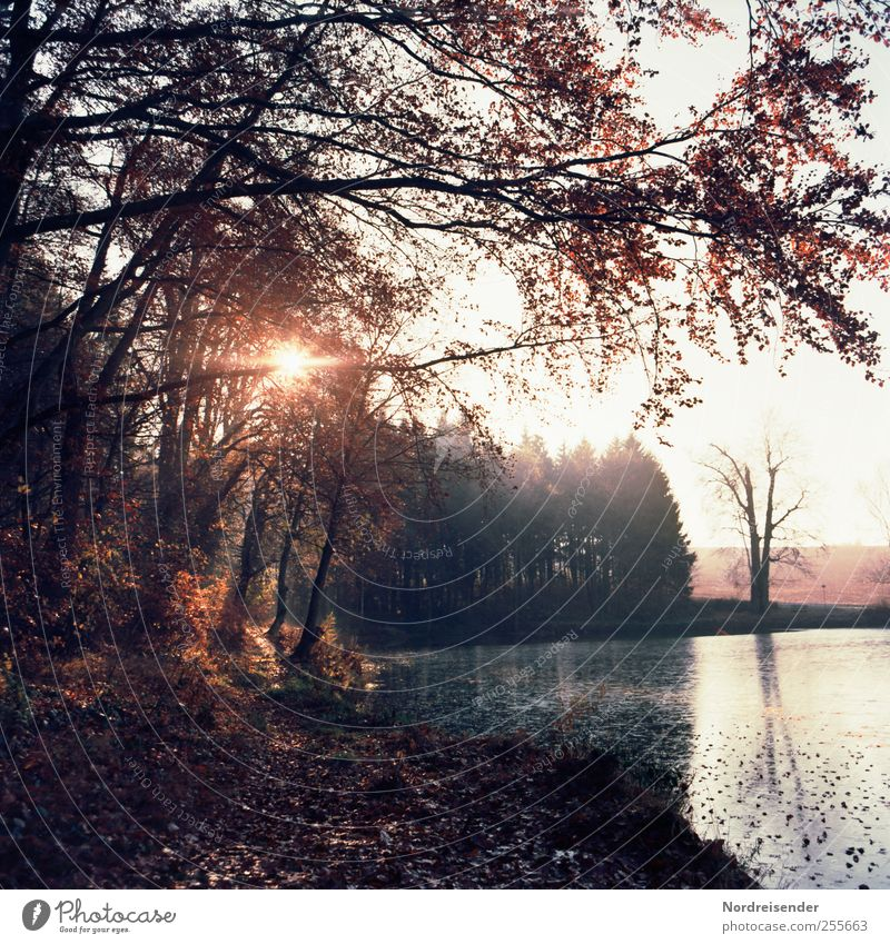 november Relaxation Calm Fragrance Trip Nature Landscape Sun Sunlight Autumn Climate Beautiful weather Forest Pond Discover Mysterious Senses Moody Transience