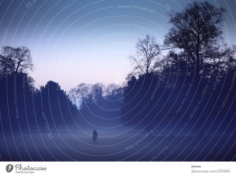 We are alone 1 Human being Nature Air Cloudless sky Autumn Fog Tree Park Going Dark Creepy Cold Blue Pink Black Moody Caution Calm Dream Grief Loneliness