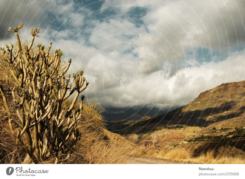 sierra Nature Landscape Infinity Dry Steppe Mountain Gran Canaria Cactus Spain Clouds Dusty Hiking Western Rock Colour photo Subdued colour Exterior shot