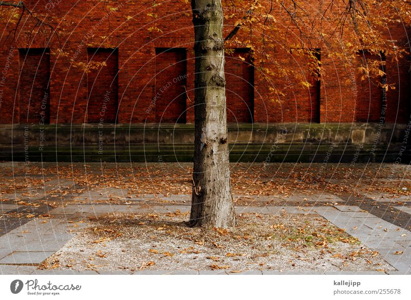 city tree Environment Nature Landscape Earth Autumn Plant Tree Leaf Park Transience Brick wall Tree trunk Berlin Colour photo Light Shadow Contrast