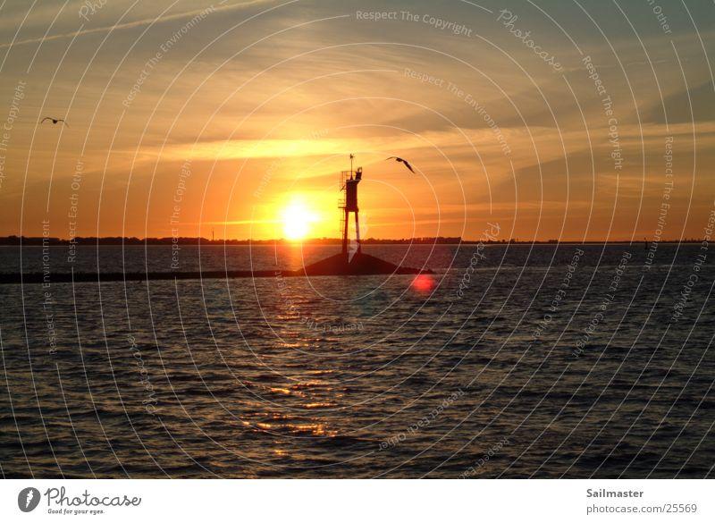 sundown Sunset Waterway Seagull Dusk Elbe River