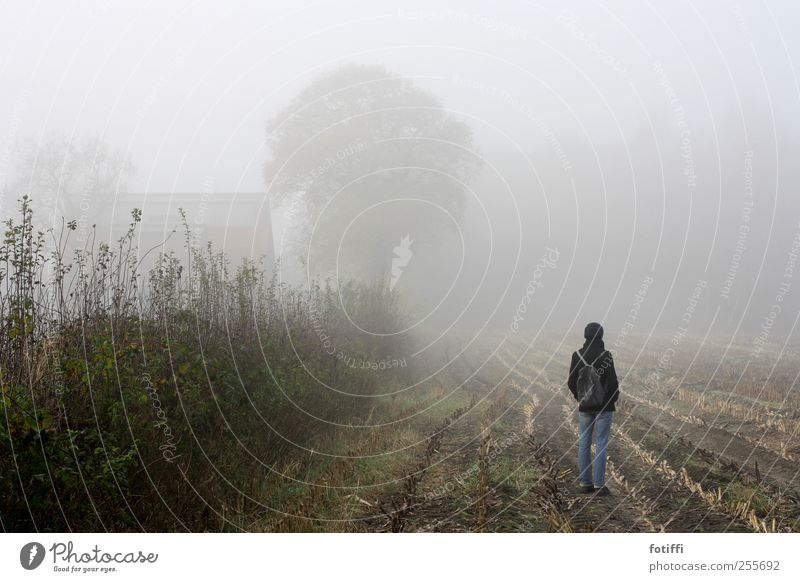 girl, fog, field & tree 1 Human being Nature Landscape Earth Sky Autumn Weather Fog Plant Hedge Field Stand Calm Stopper Sadness Haze Wait Far-off places