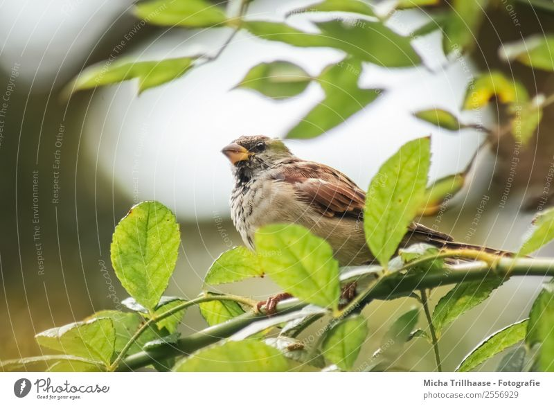 sparrow in a tree Nature Animal Sun Sunlight Beautiful weather Tree Leaf Wild animal Bird Animal face Wing Claw Sparrow Beak Feather 1 Observe Flying Illuminate