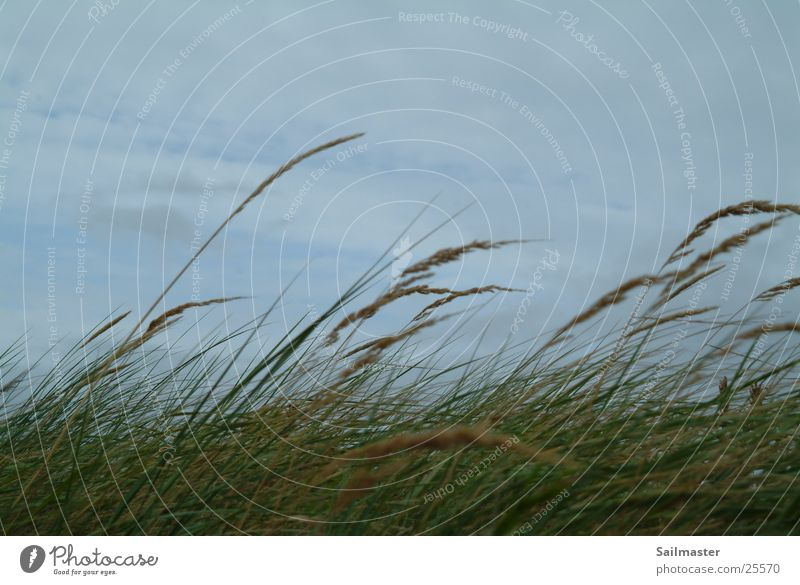 Autumn Grass Wind Common Reed North Sea Seaweed